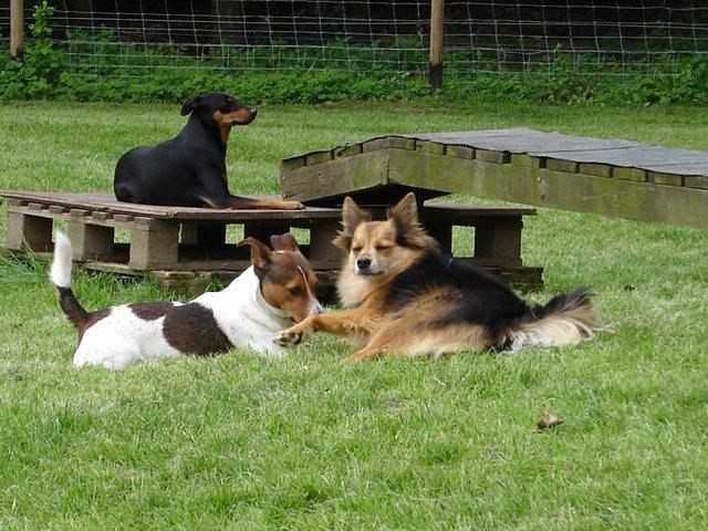 Relaxte honden zijn blije honden