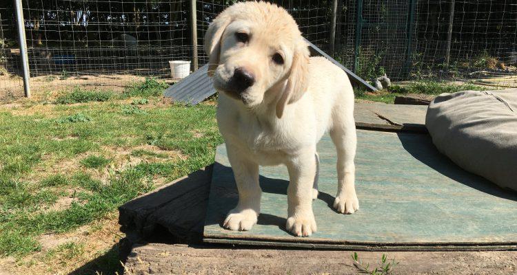 Wilt u een bedrijf starten in hondenbranche?