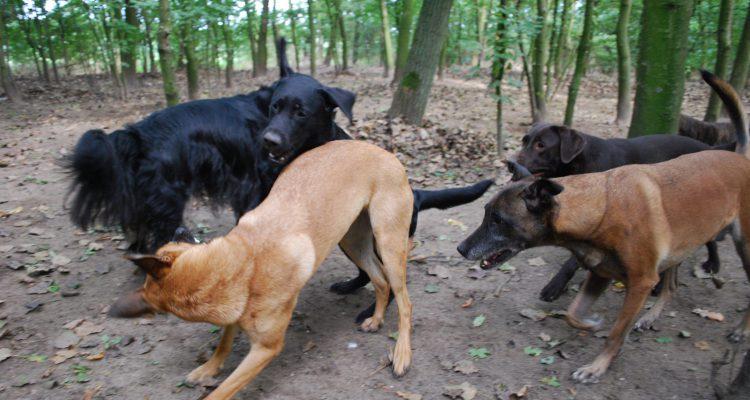 Wilt u meer weten van hondengedrag?